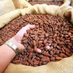 Grands Crus du Cacao